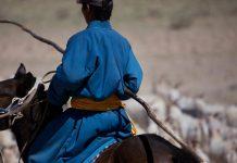 FAIR cashmere herder