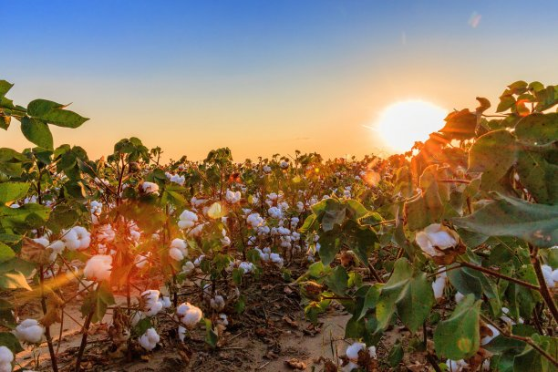 Mills and manufacturers who become members of the Trust Protocol have access to the its credit system to validate consumption of cotton and associated credits. © US Cotton Trust Protocol.