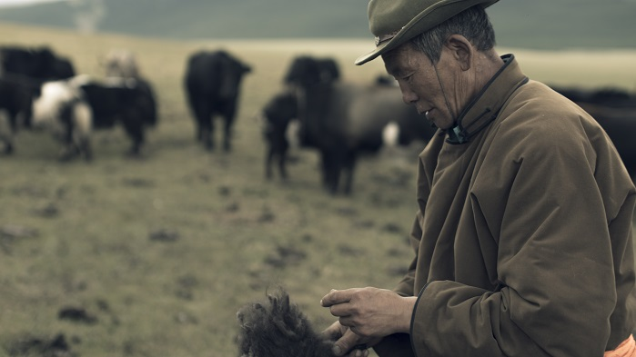 The company works with nomadic herders in Mongolia, supporting 4,500 families. © Tengri