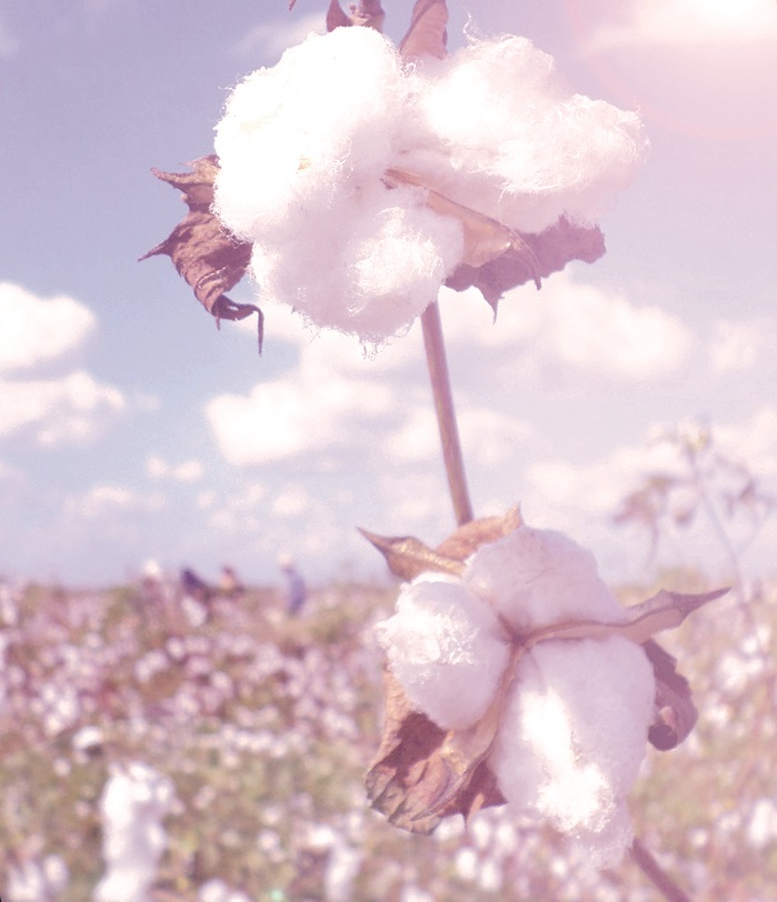 Egyptian Cotton is the most recognised luxury cotton brand in the USA and globally. © Cotton Egypt Association