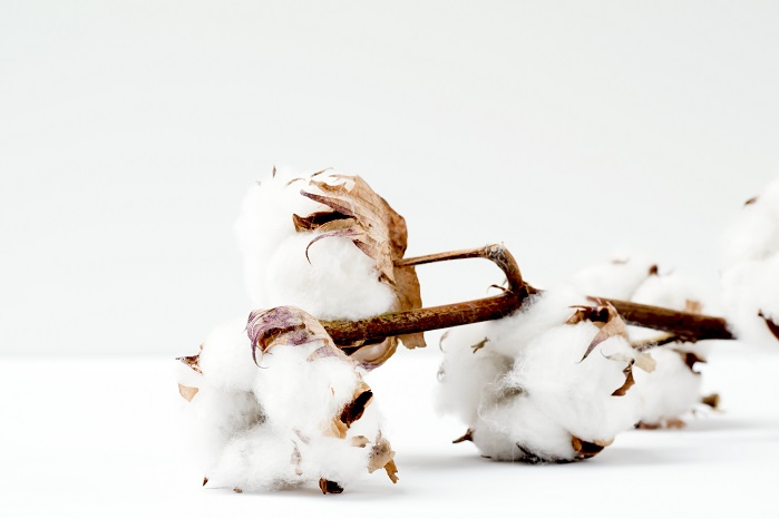 Industry first: forensic verification of origin for all US cotton. © Marianne Krohn on Unsplash